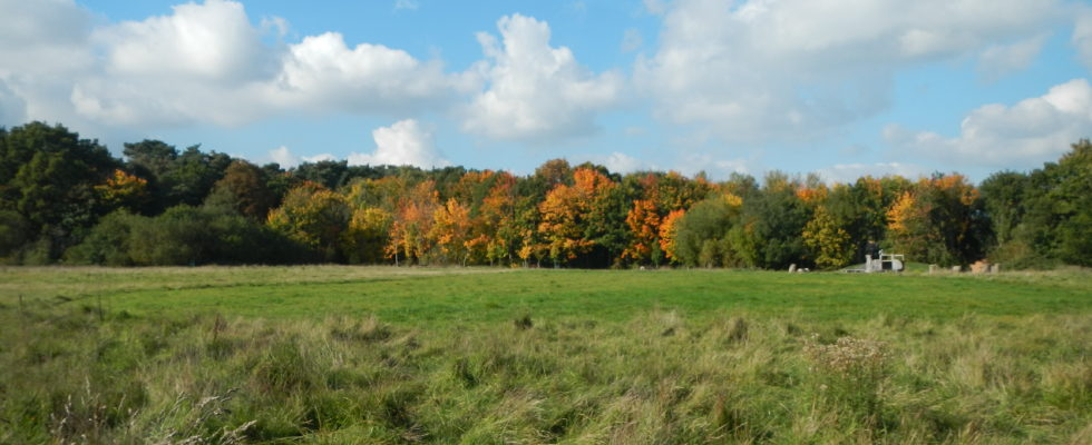 Allens Field