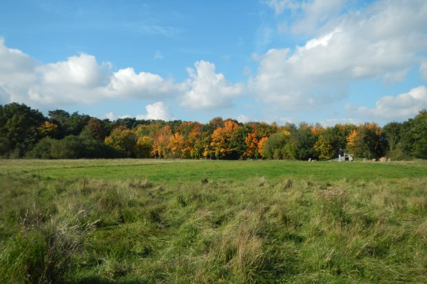 Allen's Field
