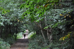 Chantry Wood