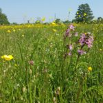 Bassetts Mead picture sent to us by Guy at Hampshire & Isle of Wight Wildlife Trust