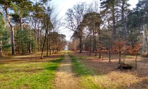 Chobham Place Woods
