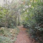 Diamond Ridge Woods