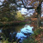 Basingstoke Canal at Brookwood Country Park