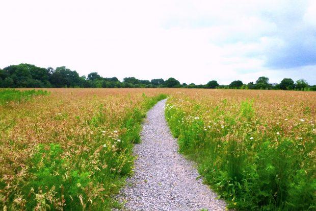 Buckhurst Meadows