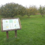 Orchard at Larks Hill