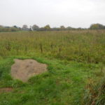 Quelm Stone at Larks Hill