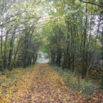 Path from Piggy Wood towards Harvest Ride