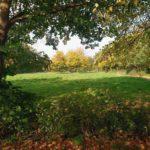 Edmund's Green by Rose Wicks