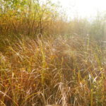 Capturing the light on the edge of the reed bed