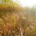 Capturing the light on the edge of the reedbed