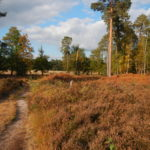Heathland is one of the special habitats at Englemere