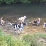 Heathland Hounds enjoying Hawley Meadows
