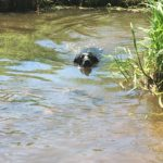 Eric enjoying his regular swim at Heather Farm contributed by Project Manager Ann
