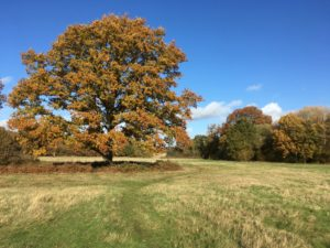 Autumn colour at Effingham Common