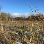 Buckhurst Meadow