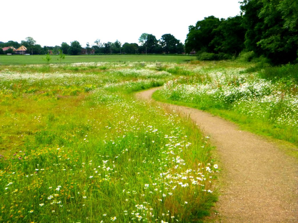 Image result for meadow