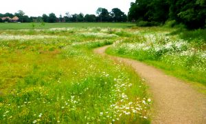 Kentwood Meadow