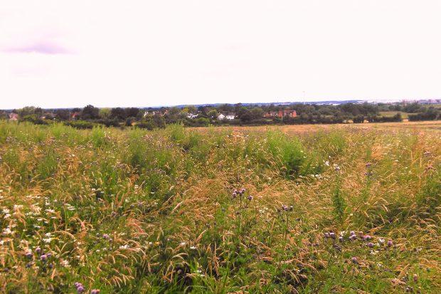 Mays Farm Meadows