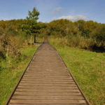 Part of the boardwalk at Riverside Nature Reserve