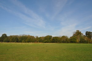 Open space at Rowhill Nature Reserve