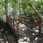 Roy Champion's bridge at Rowhill Nature Reserve
