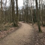 Winter path at Southwood Woodland