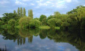 Swan Lake Park