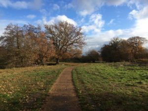 Shepherd Meadow easy access path by Sarah Bunce