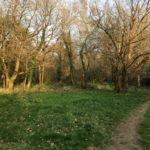 White Rose Lane, along the Hoe Stream path