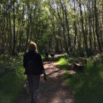 Southwood Woodlands