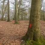 Red paint marking route of historic assault course at Wellesley Woodlands