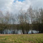 Fishing lake off Camp Farm Road, Wellesley Woodlands