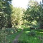 White Rose Lane Nature Reserve