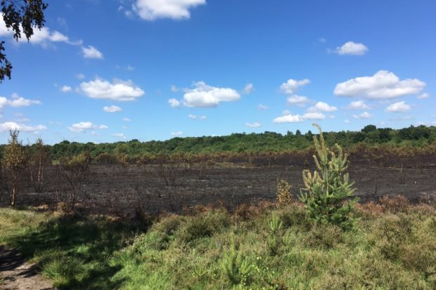 Aftermath of the recent fire at Whitmoor Common, photographed by Warden Dan