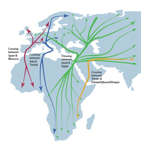 A simple map of migration routes