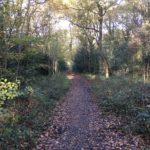 Woodland path at Bisley Common