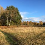 Autumn day at Bisley Common