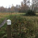 Waymarking at Bisley Common
