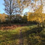 Autumn colours at Bisley Common