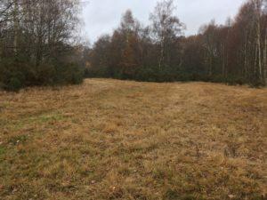 Little Heath Meadow on a damp day in November