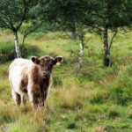 Grazing is an important conservation method on the Thames Basin Heaths