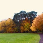 Great Hollands Recreation Ground autumn 2018 contributed by Warden Mike