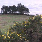 Broadmoor Farm Meadows