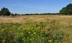 Brooklands Community Park