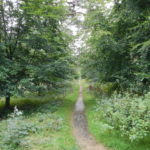 Chobham Place Woods avenue in summer by Snr Warden Sarah