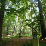 Chobham Place Woods by Snr Warden Sarah