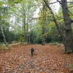 Queens Wood
