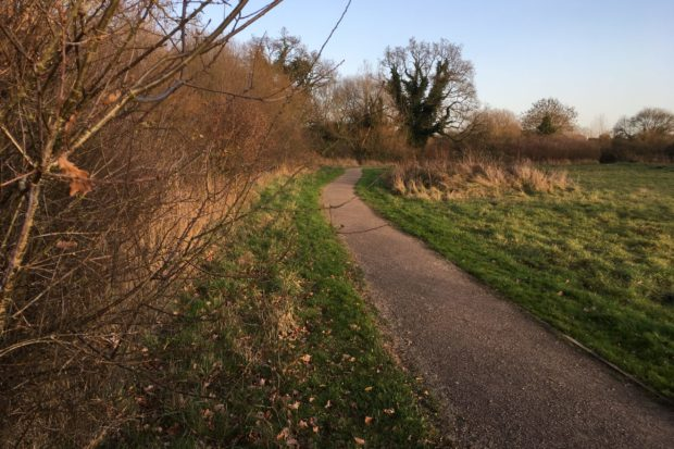 Old Forest Road Meadows