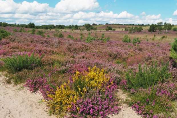 Thames Basin Heaths by Martin D'Arcy