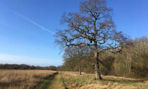 Ash Green Meadows